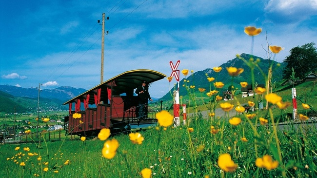 pic of train and flowers