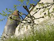 Château d'Yverdon-les-Bains