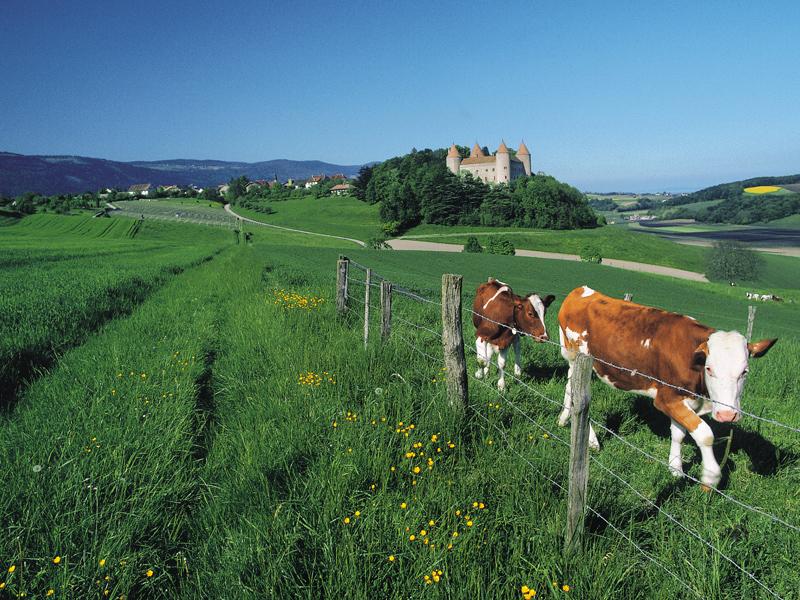 Orbe yverdon les bains region jura lac schweiz for Location yverdon suisse