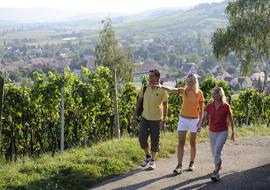 Angebot Klettgau-Rhein-Weg