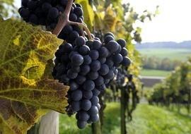 Angebot Ostschweizer Wein-Route