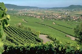 Weinwochenende im Schaffhauserland