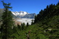 Our Bijou - the Aletsch forest