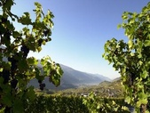 Valaisan Wine - Walk through the vineyards - Sierre