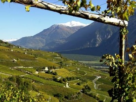 The vineyard path between Sierre and Salgesch