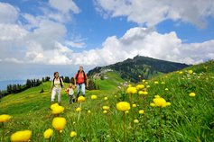 Wandern auf der Rigi