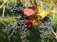 Weingut Castelen Alberswil