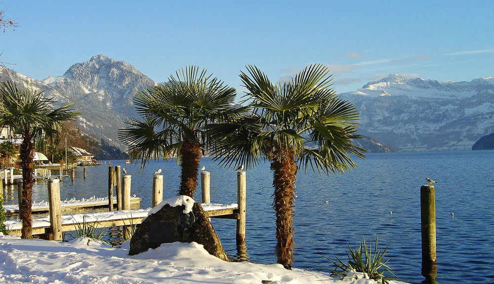 palmen schnee