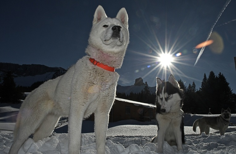 A journey to huskies' land