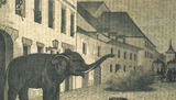 Elephant of Murten - 150 years anniversary