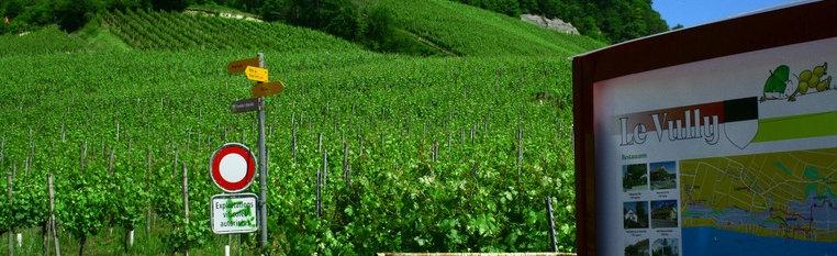 Sentiers le vully r gion lac de morat suisse for Le jardin morat