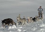 Dog-sleigh outing