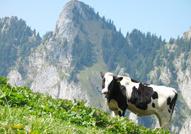 Agrotourismus