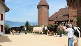 La ferme en ville 2012 © Estavayer-le-Lac/Payerne Tourisme