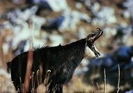 Parc naturel régional Gruyère Pays-d'Enhaut