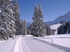 Cross-country skiing - Lombachalp
