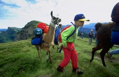 Lamatrekking - Jungfrau Region