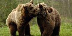 Bern - Copyright Tierpark Dälhölzli