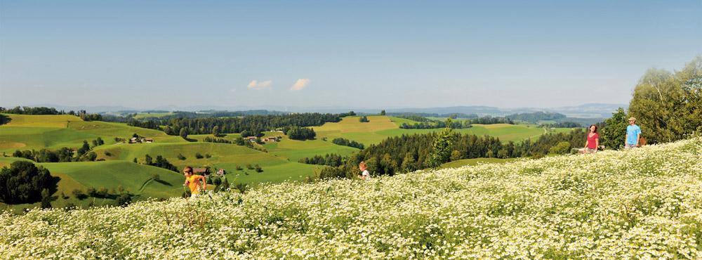 Kräuterfeld bei Hergiswil b.W.