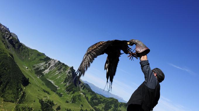 Eagle experience hike