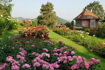Rosengarten - Blütenzauber in Winterthur