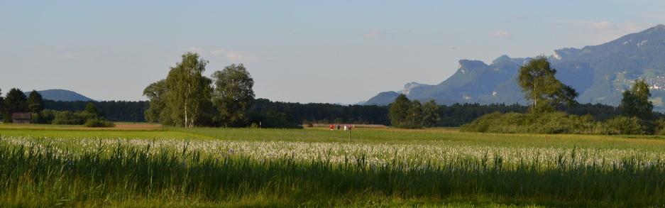 Wiesen im Ruggellerriet