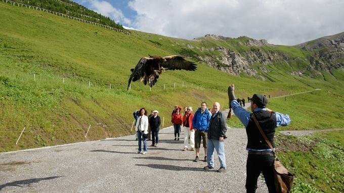 Adlerwanderung Falknerei Galina
