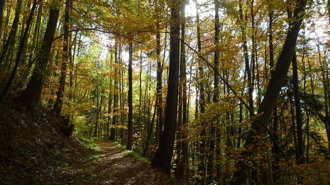 Grüschaweg Trail
