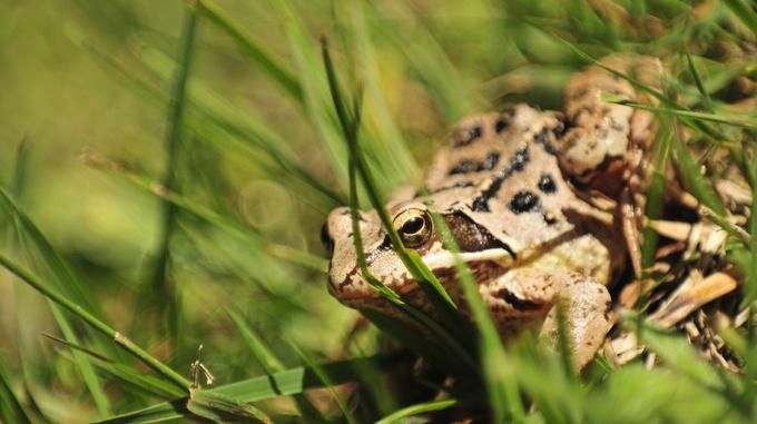 Frosch im Malbun