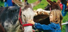 Meeting the animals is a hands-on experience in Malbun