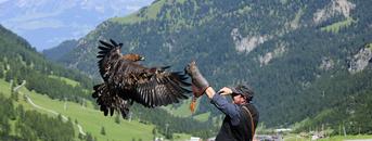 Adlerwanderung