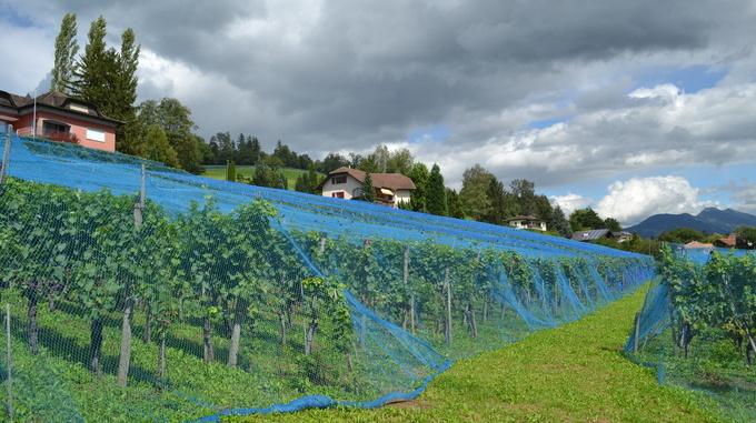 Castellum Vineyard Eschen