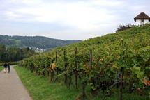 Lebendiger Weinweg