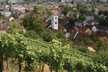 Rebberg Winterthur
