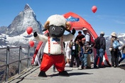 Wolli auf dem Gornergrat