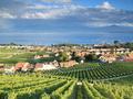 Vignobles La Côte