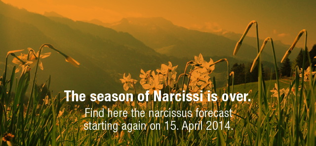 Narcissus forecast on 15.4.2014