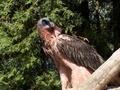 @zoo de la Garenne