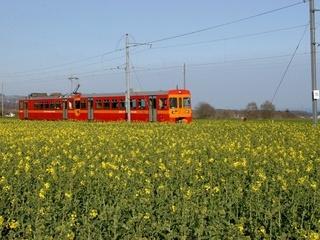 Petit train rouge, NSTCM