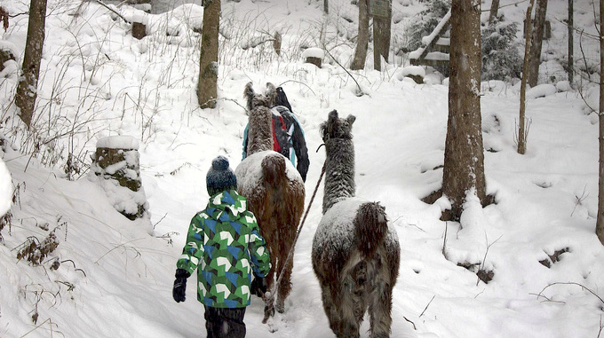 Lama Trekking Winter