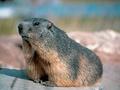 Marmottes Paradis