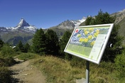 The flower trail (Blumenweg) in Zermatt